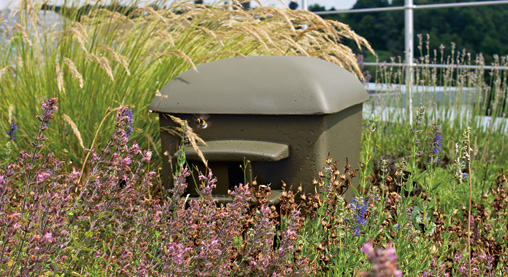 Biodiversity green roof